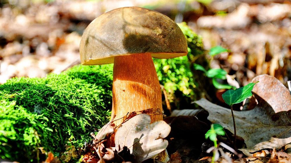 zdrowa dieta powinna zawierać grzyby